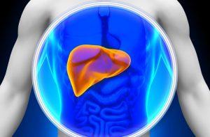 Hígado - Falso mito del colesterol